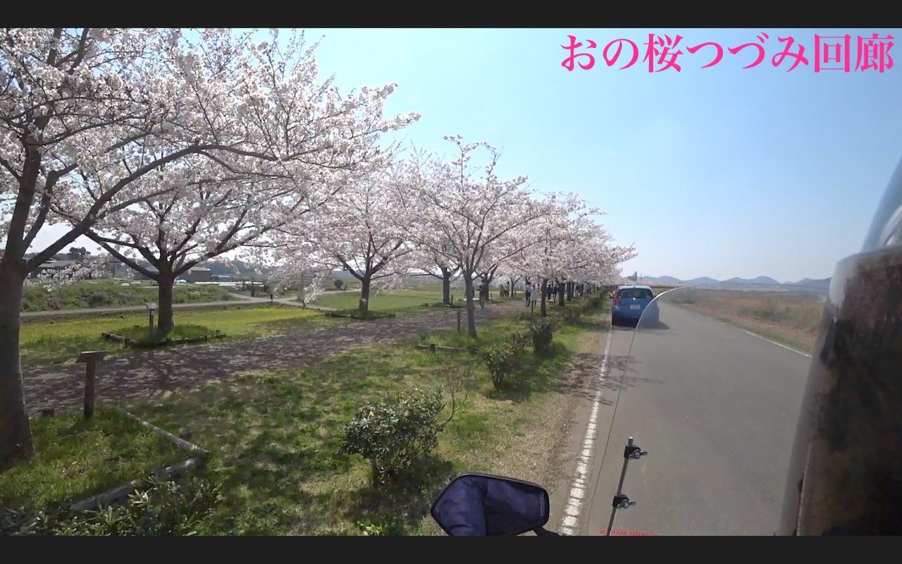 おの桜つづみ回廊